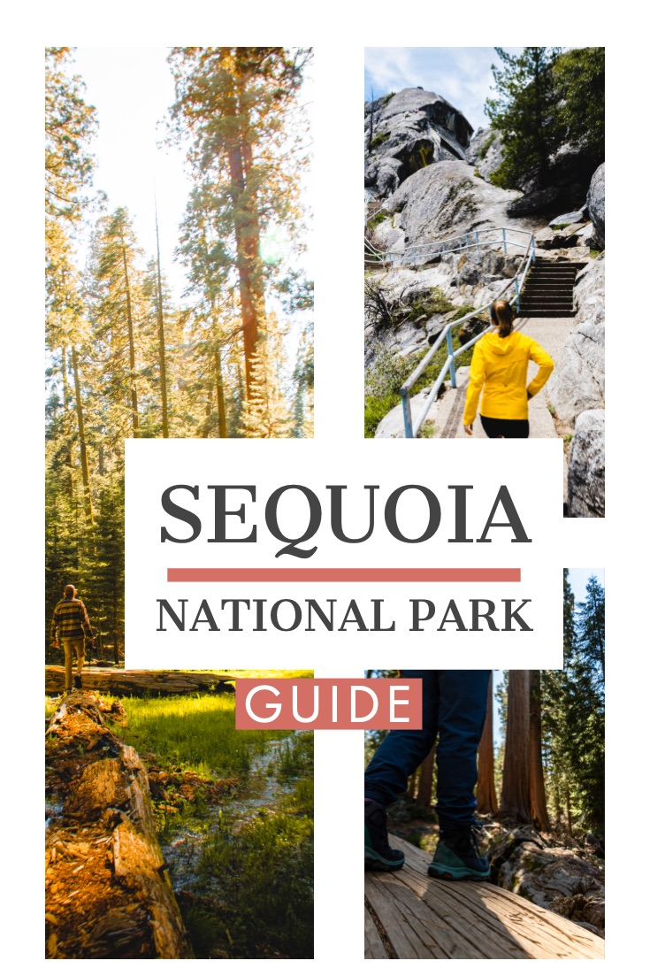 One Day in Sequoia